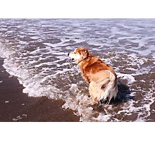 saz running after the ball in the sea Photographic Print