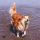 saz...running through the sea by xxnatbxx