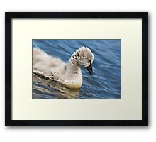 The Ugly Duckling Framed Print
