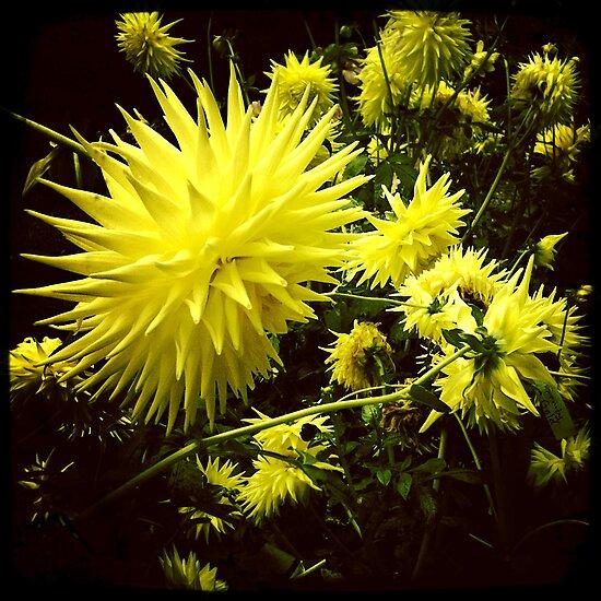 Funky Flowers by Benjamin Liew