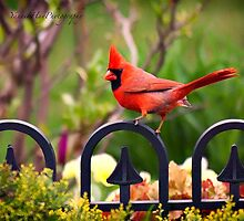 Male Red Cardinal in the Garden by Yannik Hay
