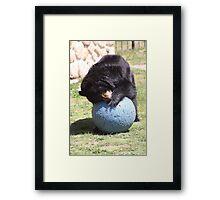 bear games Framed Print