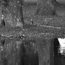 Reflections - Theory in Composition  by Matsumoto