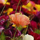 Abundant Color by photojeanic