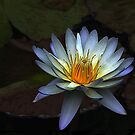 Low Key Waterlily by Teresa Zieba
