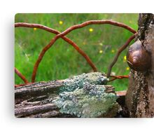 Even the wood is crusty,,, Canvas Print
