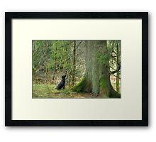Tarn and the Tree Framed Print