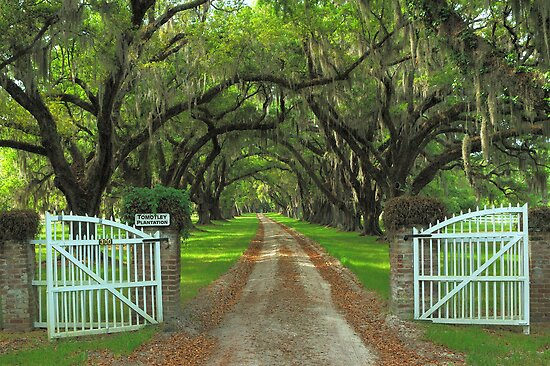 Tomotley Plantation, Sheldon, South Carolina by fauselr