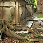 Confederate gravestone and live oak roots, Old Sheldon Church Ruins, Sheldon, South Carolina by fauselr
