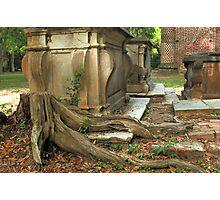 Confederate gravestone and live oak roots, Old Sheldon Church Ruins, Sheldon, South Carolina Photographic Print