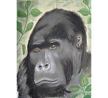 Silver back gorilla Photographic Print