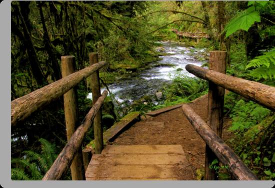 Bridge on the Trail by bicyclegirl