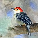 Red Bellied Woodpecker by Peter Stratton