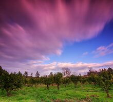 Magic light over the orchard by Patrick Morand