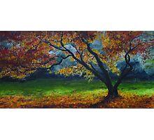 My love of trees IV Photographic Print
