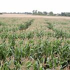 Maize Maze by kezbomb