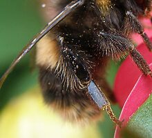 Isn't this just the bees knees.... by Elaine Game