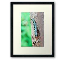 Forest Caterpillar Framed Print