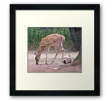 The Fawn And The Pit Bull Framed Print