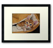 Orange Kitten Tucked into Bed Framed Print