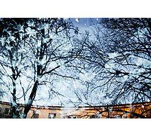 leaf sky Photographic Print