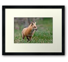 Fox Biscuits Framed Print