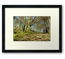 The Terrier and the Wood Framed Print
