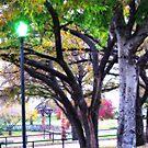 Park Light by Sandra Moore