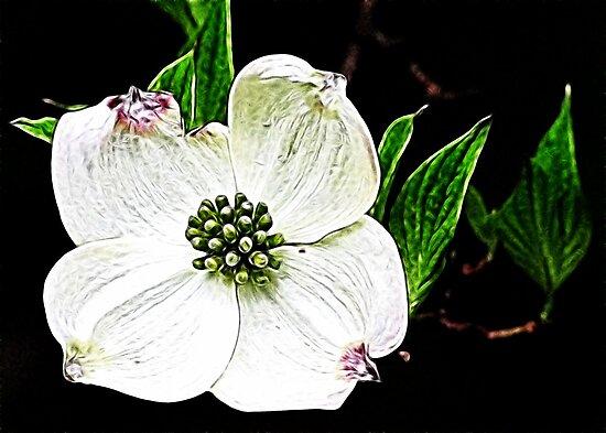 Simply White by Sviatlana
