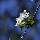 White on Blue by Sara Johnson