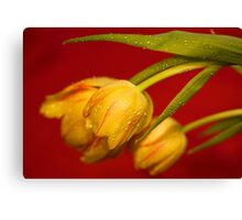 Droopy Canvas Print