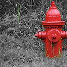 Hydrant 2 by Matthew Williams