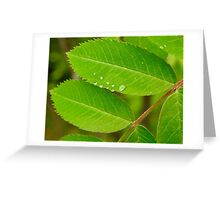 Dew on Mountain Ash Greeting Card