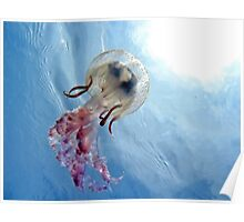 Mediterranean jellyfish with water surface in background Poster