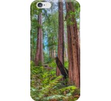 Scary tall Redwoods that stand high in their forest iPhone Case/Skin