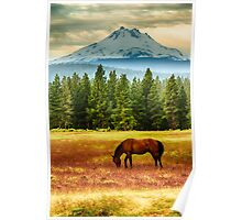 Horse and Mt Jefferson Poster