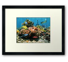 Coral reef with colorful tropical marine life Framed Print