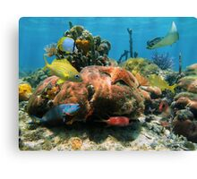 Coral reef with colorful tropical marine life Canvas Print