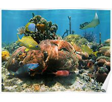 Coral reef with colorful tropical marine life Poster