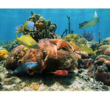 Coral reef with colorful tropical marine life Photographic Print