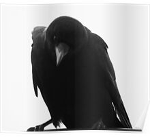Crow... are you looking at me? Poster
