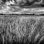Wind in the Weeds by Bob Larson