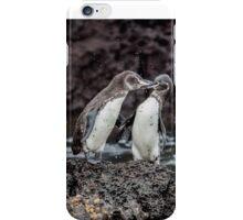 Galapagos Penguins iPhone Case/Skin