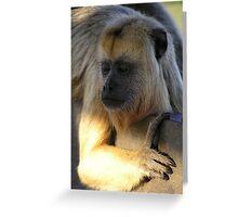 Howler monkey - Pantanal, Brasil Greeting Card