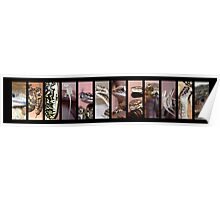 Reptiles Strip Black Collage Poster