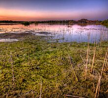 Swamp Sunset by Bob Larson