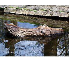 Water Logged Photographic Print