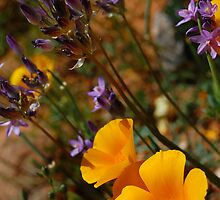 Wildflowers by AsEyeSee