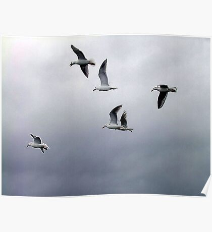 Gulls in a Storm (2) Poster