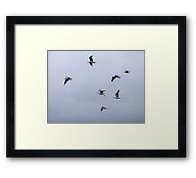 Gulls in a Storm (3) Framed Print